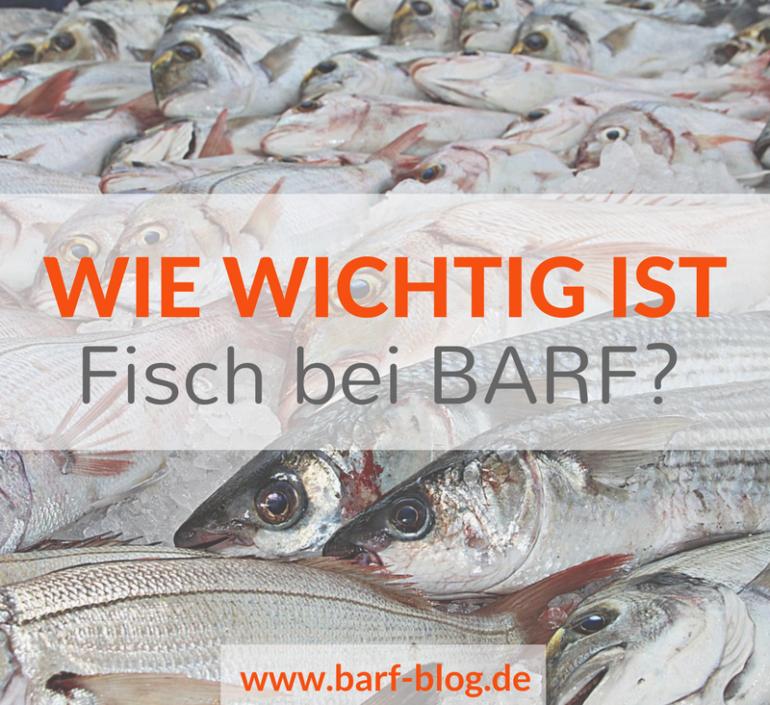 Und was ist mit Fisch? Fisch in der Rohfütterung