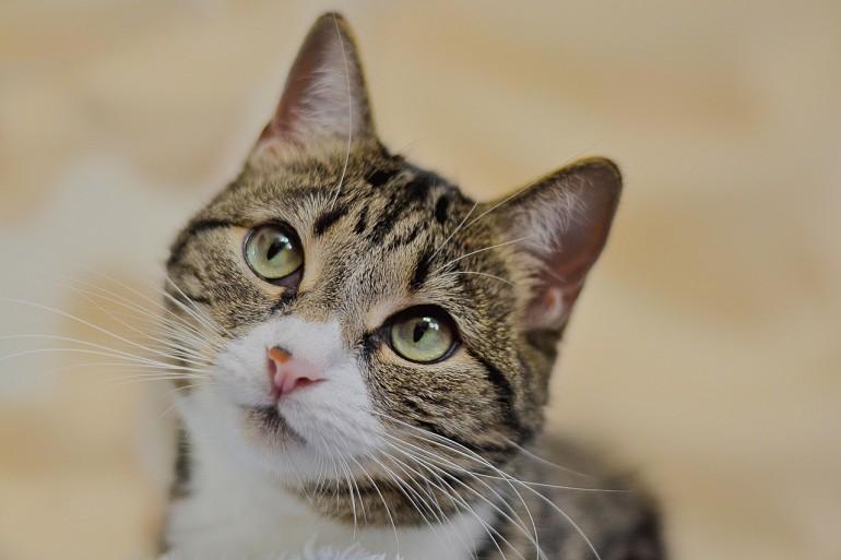 Katzen barfen - Die Grundlagen