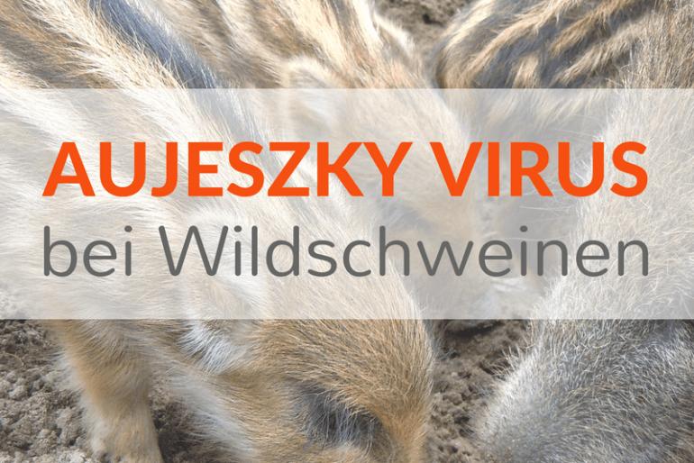 Aujeszky Virus – Wie gefährlich ist es in der Rohfütterung?