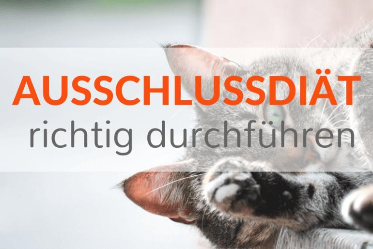 Futtermittelallergie bei Hund und Katze – Wie Du eine Ausschlußdiät richtig durchführst