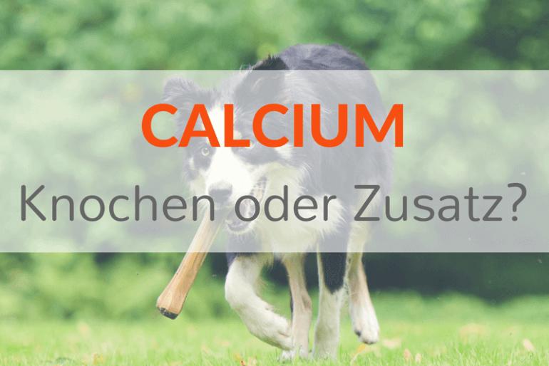 Calcium beim BARFen – Welche Möglichkeiten gibt es zur Bedarfsabdeckung?