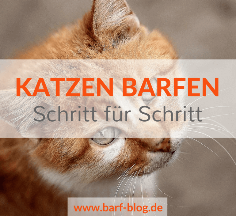 katzen auf barf umstellen schritt f r schritt erkl rt. Black Bedroom Furniture Sets. Home Design Ideas