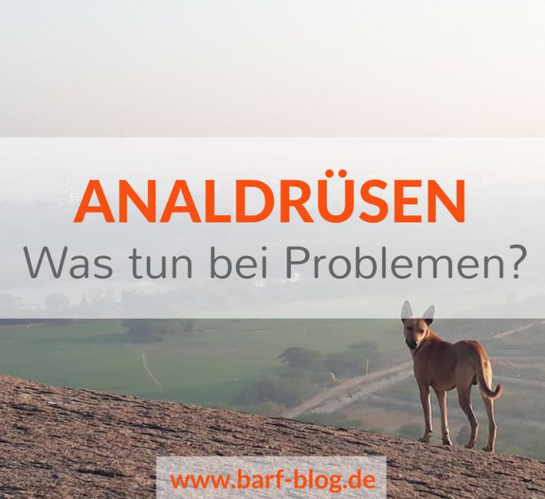 Immer Ärger mit den Analdrüsen – (nicht nur) ein Fütterungsproblem