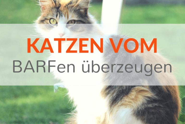 Wie überzeuge ich meine Katze von der Rohfütterung?