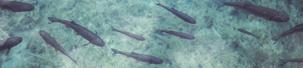 fish_klein
