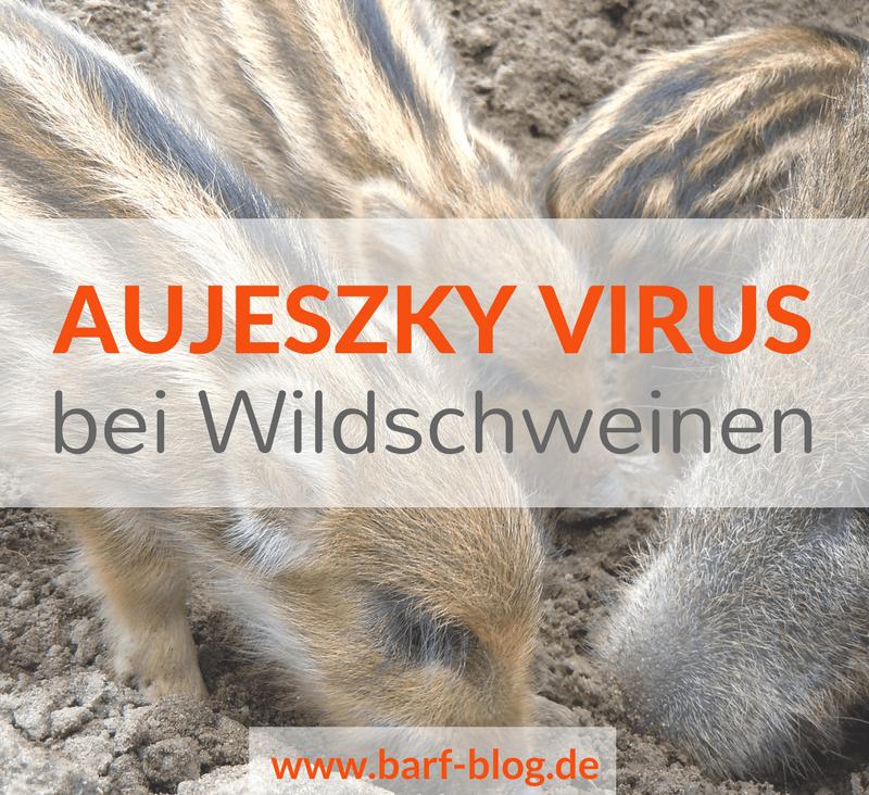 Aujeszky Virus bei Wildschweinen