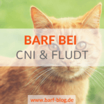 CNI BARF Katze