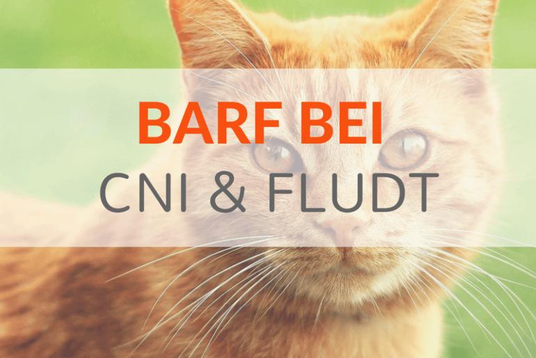 BARF bei CNI und Harnwegserkrankungen von Katzen – Ein Überblick