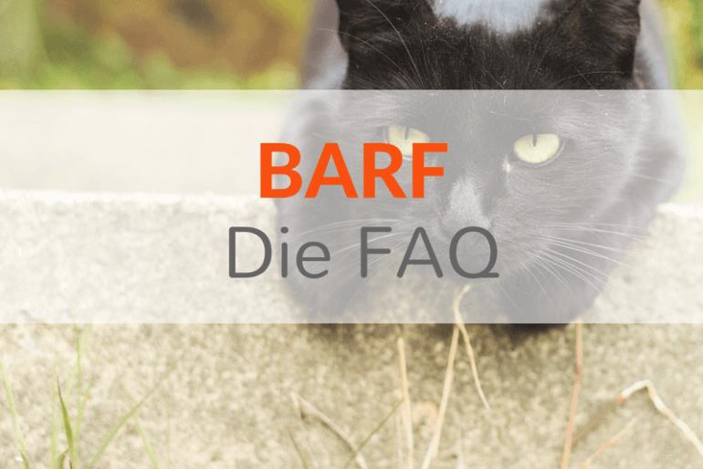 FAQ – Die häufigsten Fragen zu BARF / Rohfütterung