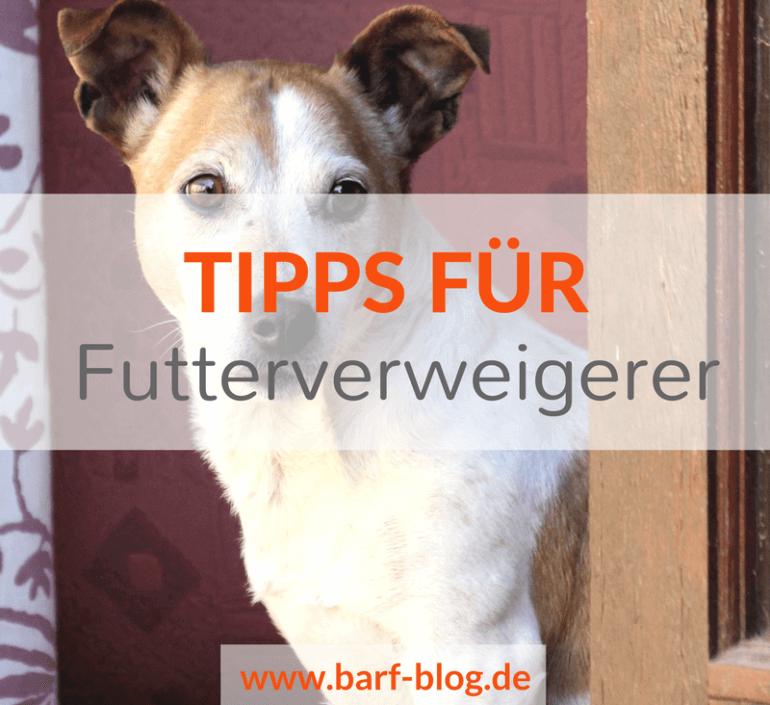 Futterverweigerung: 5 Tipps, damit Dein Hund dauerhaft besser frisst