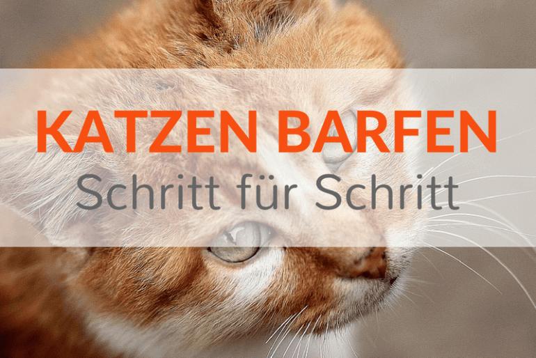 Katzen barfen Schritt für Schritt