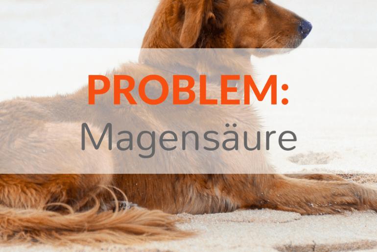 Problem Magensäure: Übersäuerung, Gastritis und Licky Fits bei Hunden