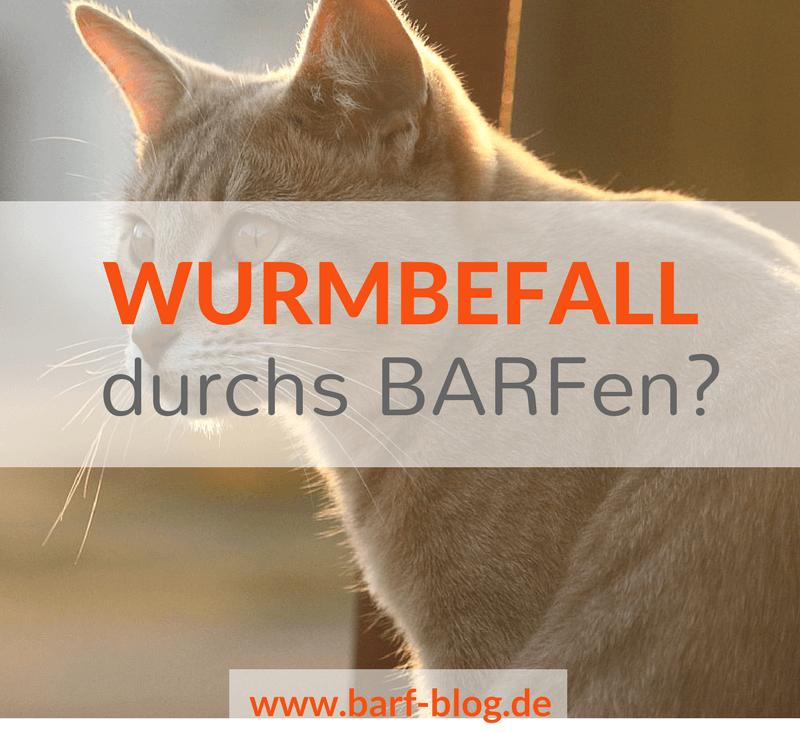 Würmer Wurmbefall BARFen