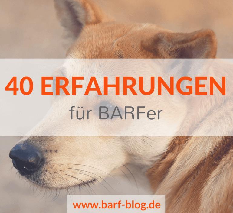 40 Erfahrungen und Gedanken für BARFer