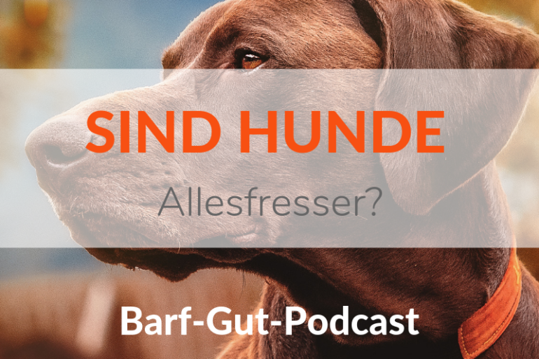 Ist der Hund ein Allesfresser?