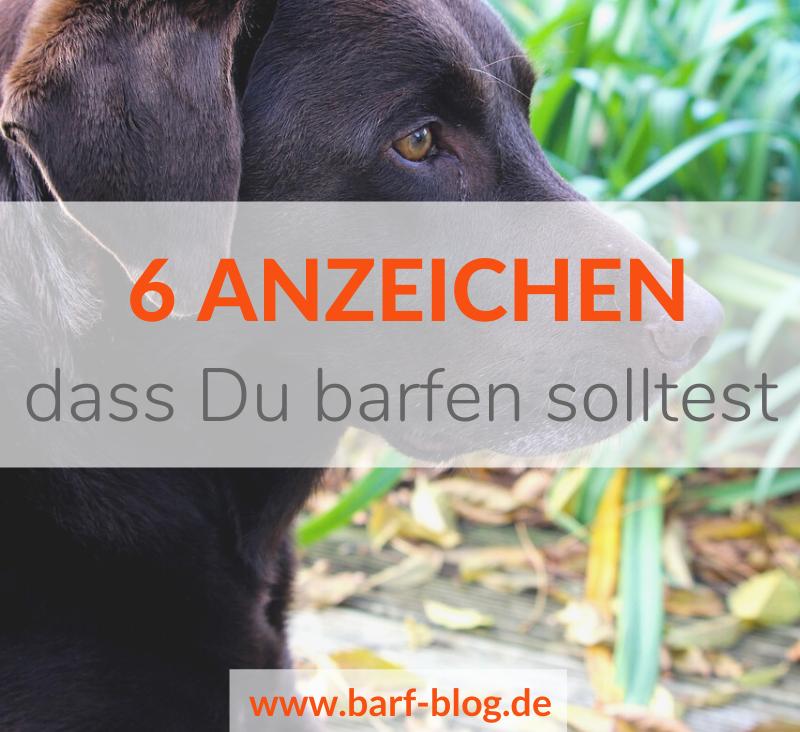 6 Anzeichen, dass Dein Hund gebarft werden sollte