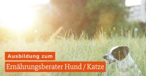 Ausbildung Ernährungsberater Hund / Katze